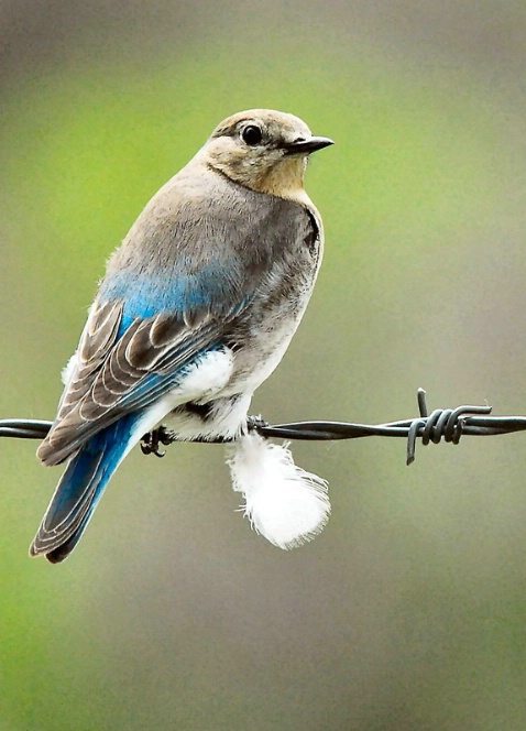 A Bluebird Lady