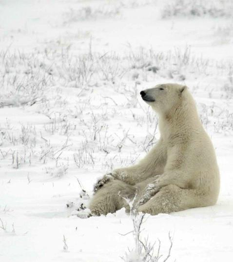 Polar zen