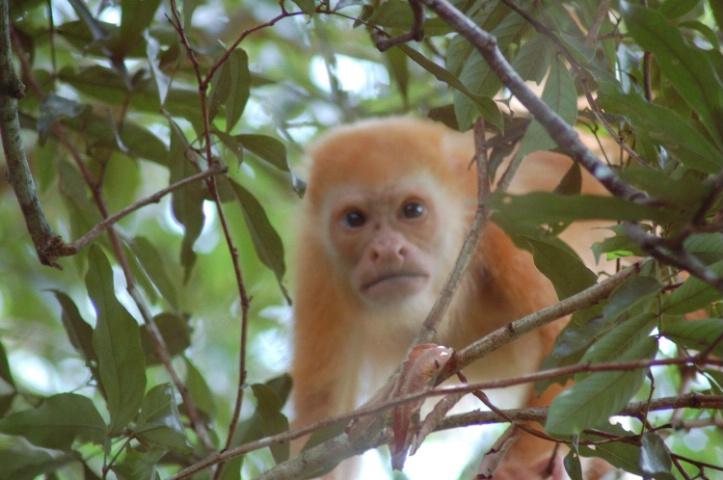 """""""Blondie"""" in Costa Rica"""