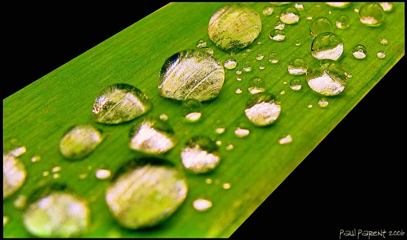 Water on a leaf