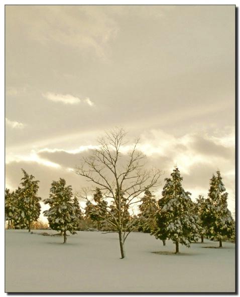 Winter Scene,  Rural Maryland