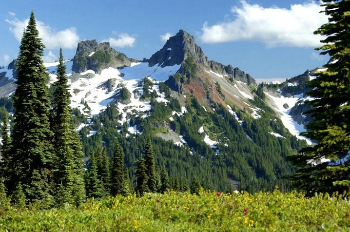 Mt. Ranier View