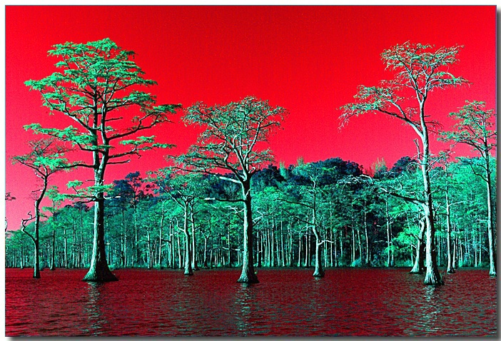 Red Sky at Night, Cypress Delight