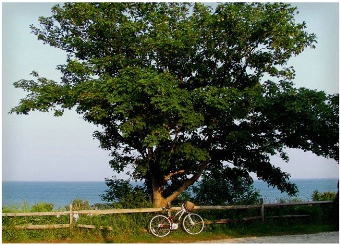 Summerhouse Bike #131