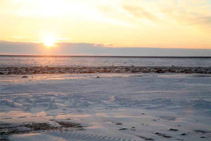 A golden glow on the tundra at Gordon Point