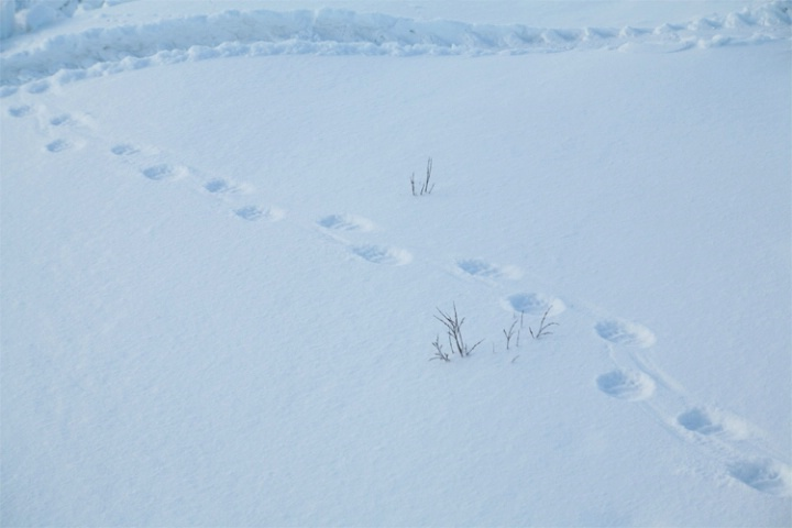 Designs in the snow