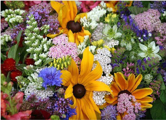 Main Street Flowers #241