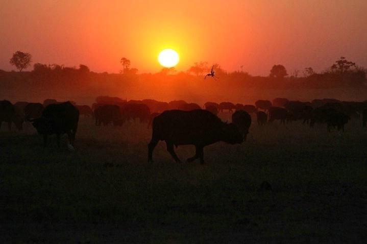 Duba Plains Sunset