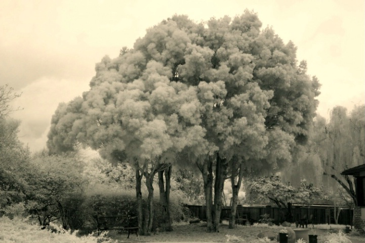 Old Tyme in IR