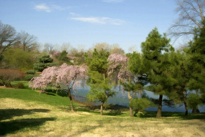 Spring at the Missouri Botanical Garden