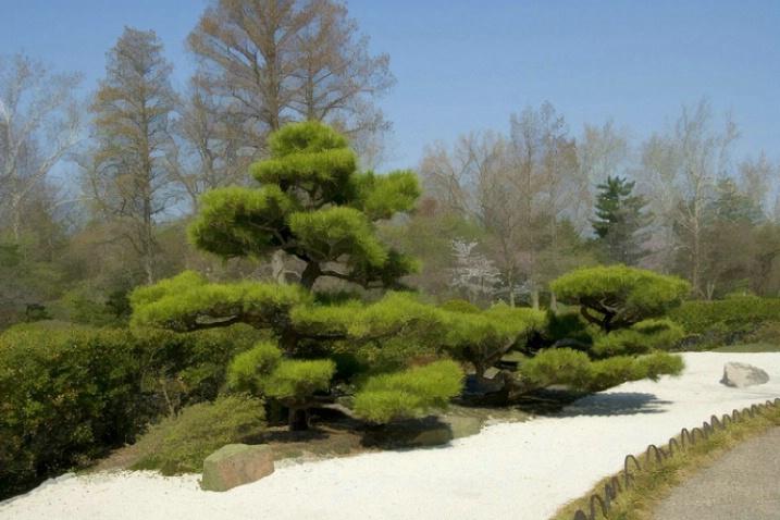 Missouri Botanical Gardens - japanese garden