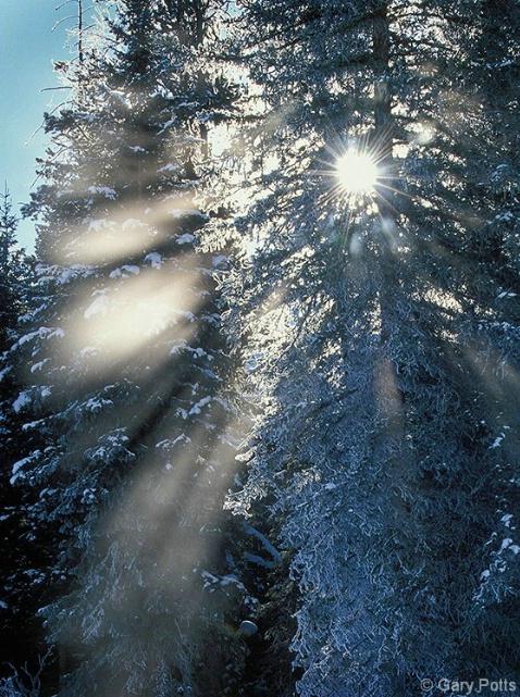 Wintertime Starburst