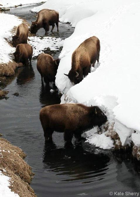 buffalo_creek3