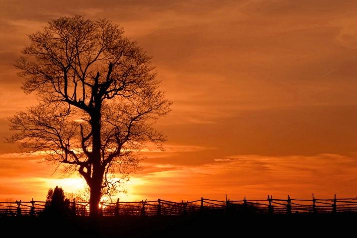Battlefield Sunset