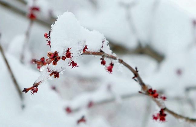 """Last Snow"""