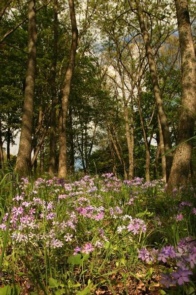 Flowered Glen