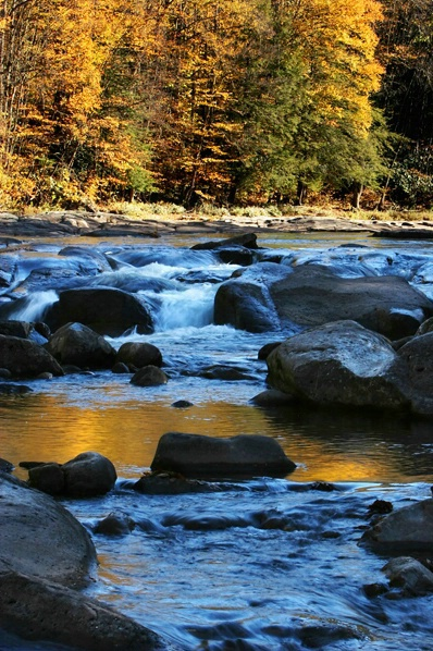 Williams River, Pocahontas Co., WV -  vertical