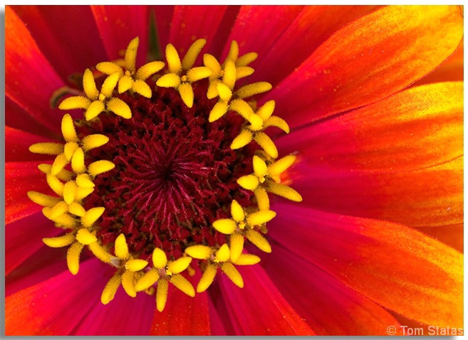 Flowers in Flowers
