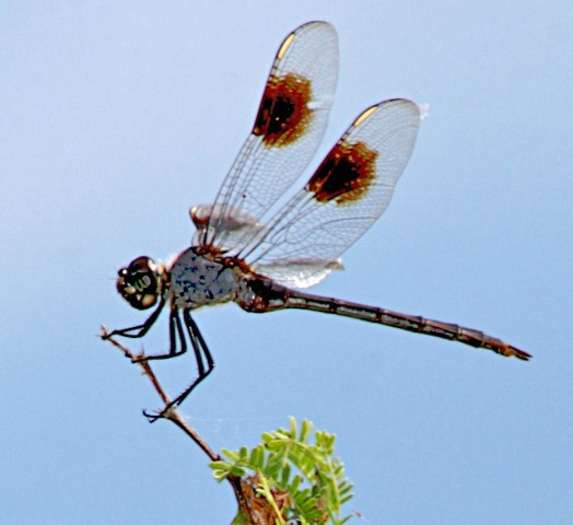 Dragonfly on small branch