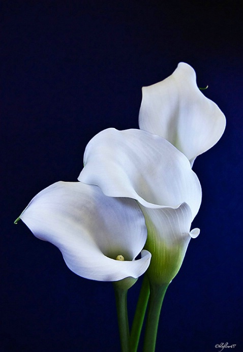The Same Three Callas