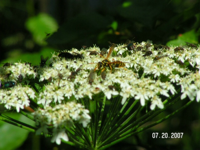 Bear Lake Flora and Fauna