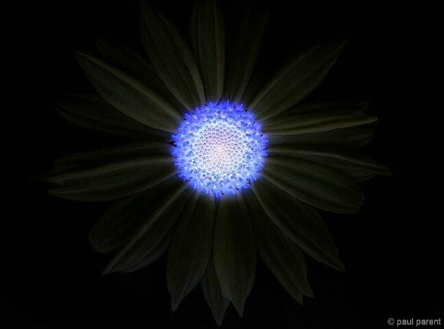 The Infrared Flower