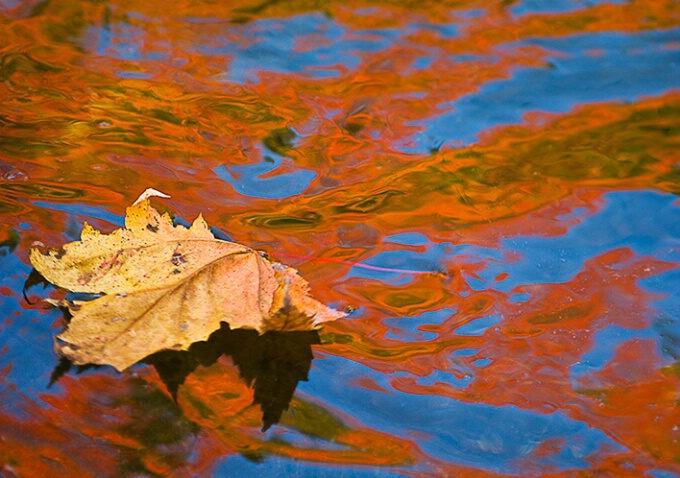 Red and blue reflection with leaf, New Hampshire