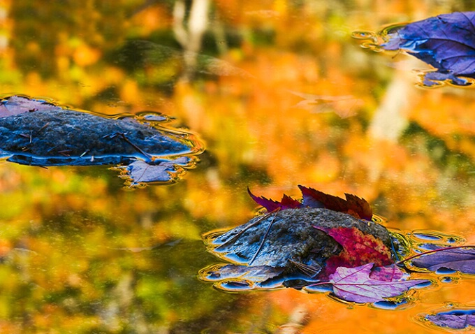 Fall leaves and reflection, New Hampshire