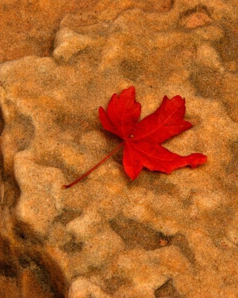 Leaf - Zion