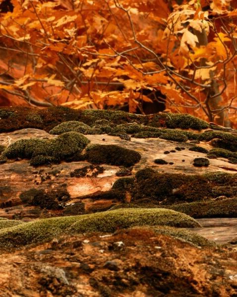 Fall - Zion
