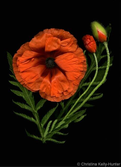 Flower Wisdom 105
