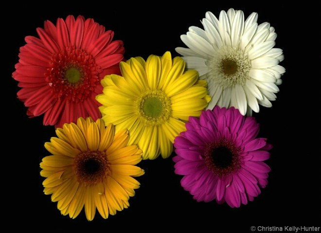 Flower Wisdom 37