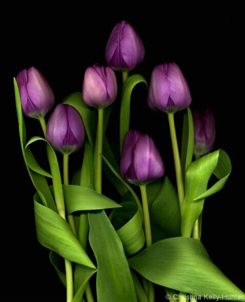 Flower Wisdom 108
