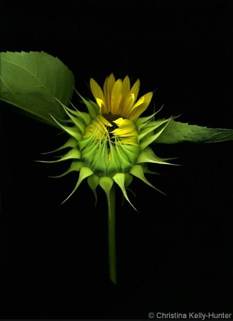 Flower Wisdom 107