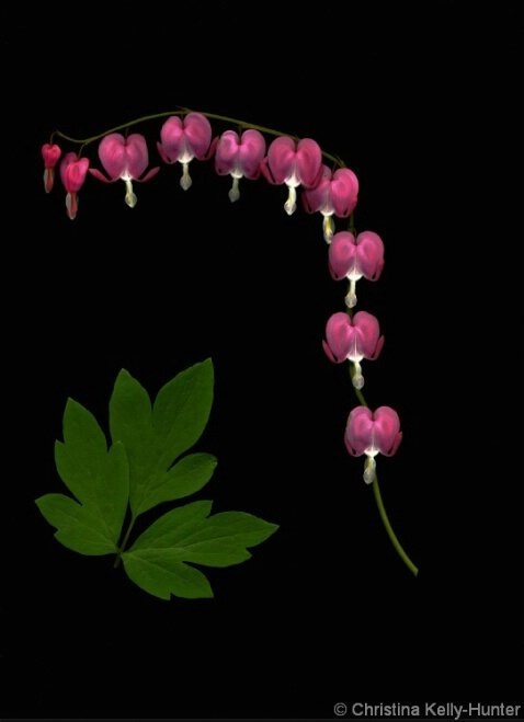 Flower Wisdom 40