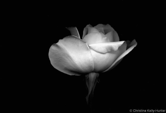 Flower Wisdom 43