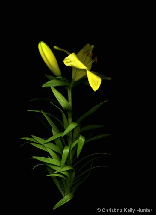 Flower Wisdom 58