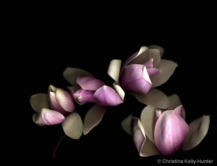 Flower Wisdom 64