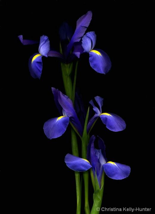 Flower Wisdom 61