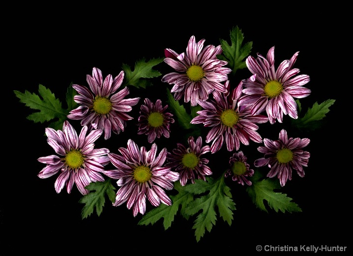 Flower Wisdom 59