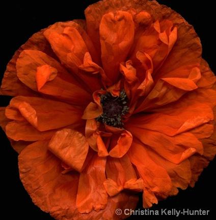 Flower Wisdom 70
