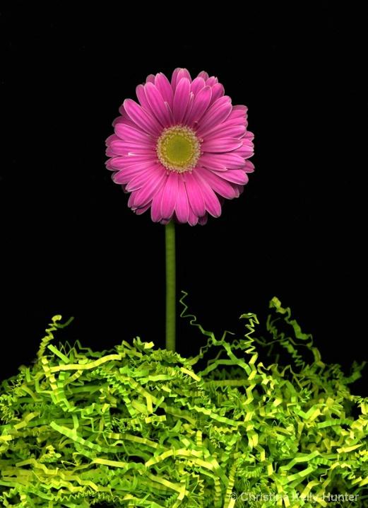 Flower Wisdom 69