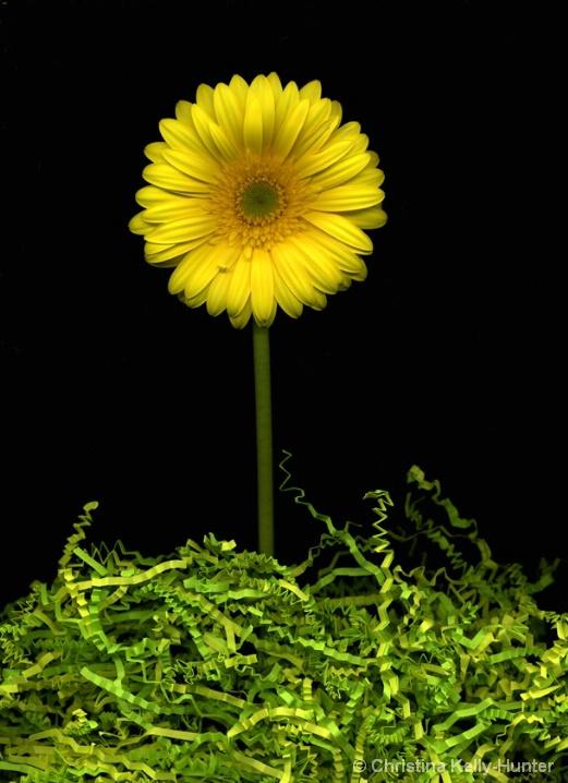 Flower Wisdom 68