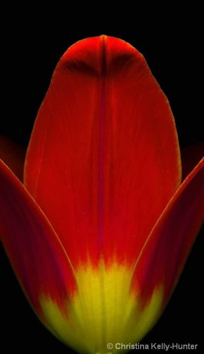 Flower Wisdom 67