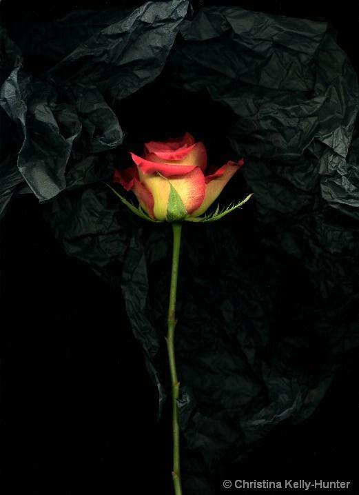 Flower Wisdom 71