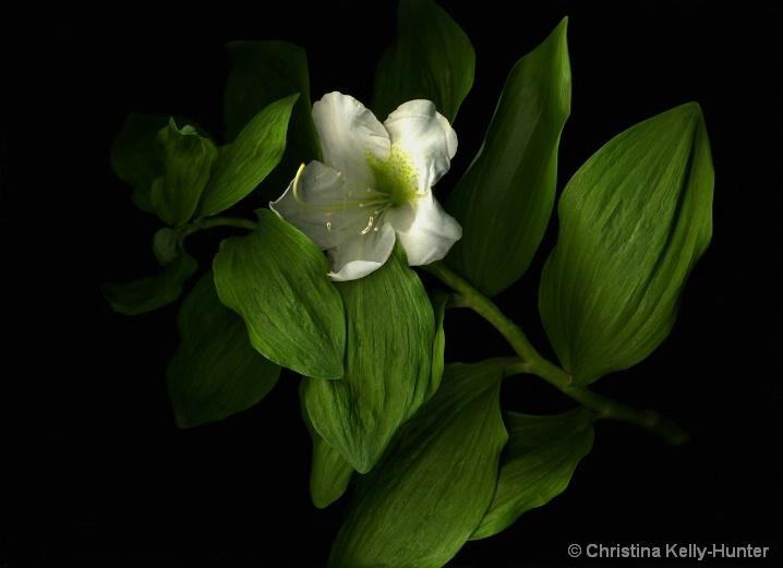 Flower Wisdom 72