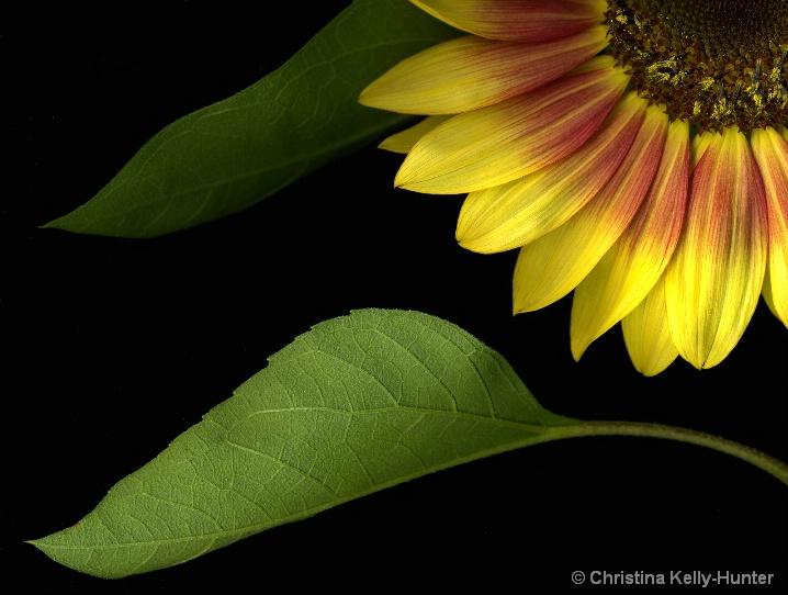 Flower Wisdom 74