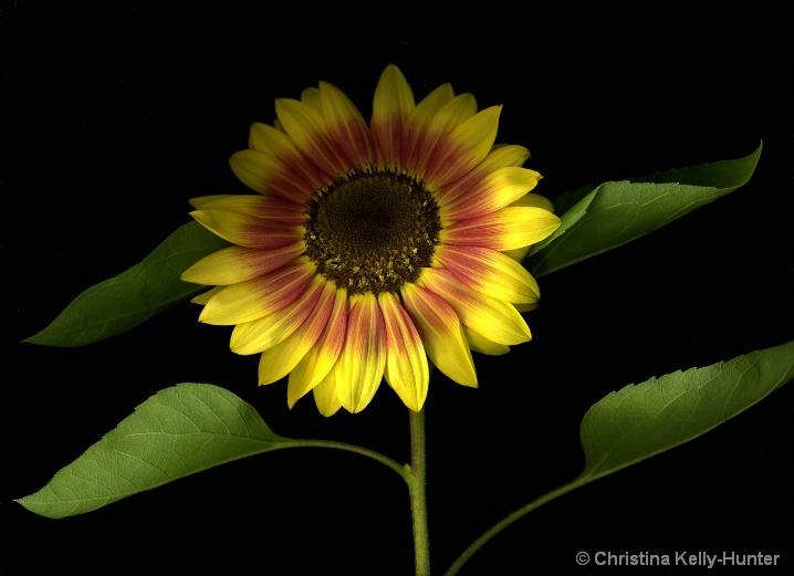 Flower Wisdom 75