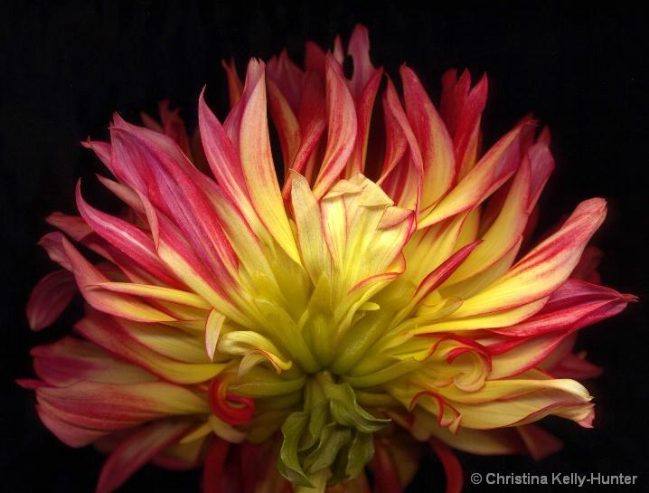 Flower Wisdom 81