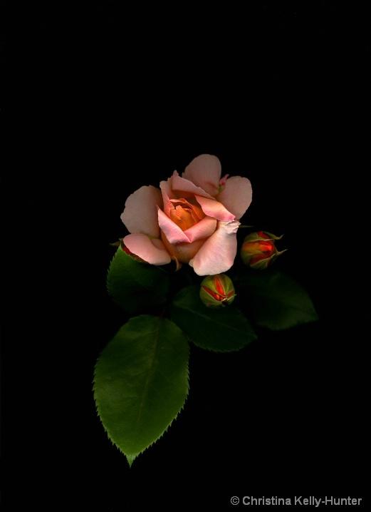 Flower Wisdom 86